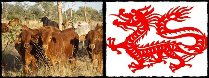 cattle-horz