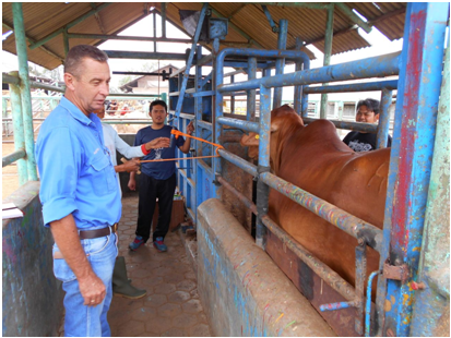 Greg providing advice to feedlot staff in West Java.