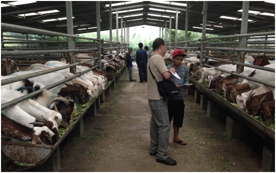 Excellent facilities at the Kambing Burja farm near Surabaya, East Java