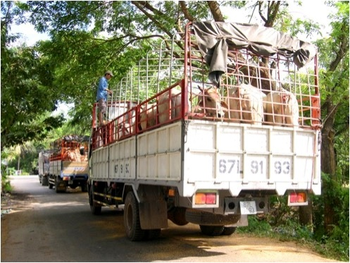 Legal imports on their way to Ho Chi Minh City after purchase and processing at the official border crossing.
