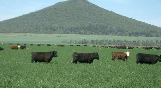 All segments of the cattle production system will benefit from the same fundamental changes.