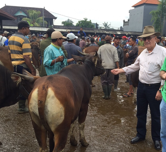 David Heath with a Bali bull that was sold twice in less than one hour while we watched the trading action.