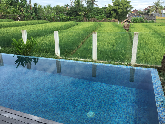 The infinity pool at Dicky's new villa overlooking a classic Bali rice paddy scene in Seminyak. This paddy has been locked away from developers to ensure that new brick walls do not disturb this beautiful vista.