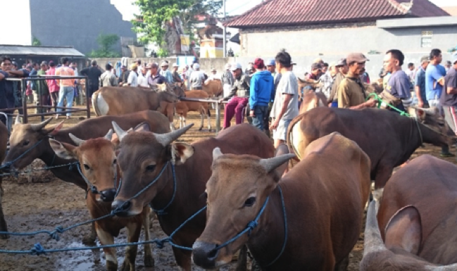 "Photo from David Heath : Beringkit cattle market Tabanan, Bali - mid Ramadan. The market is clearly ""down in the calf pen""."