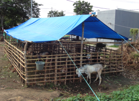 As Qurban approaches, temporary sale yards like this one appear on strategically located vacant land all over Indonesia so prospective donors might personally select their animals.