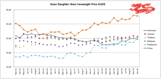 Asian Slaughter Steer