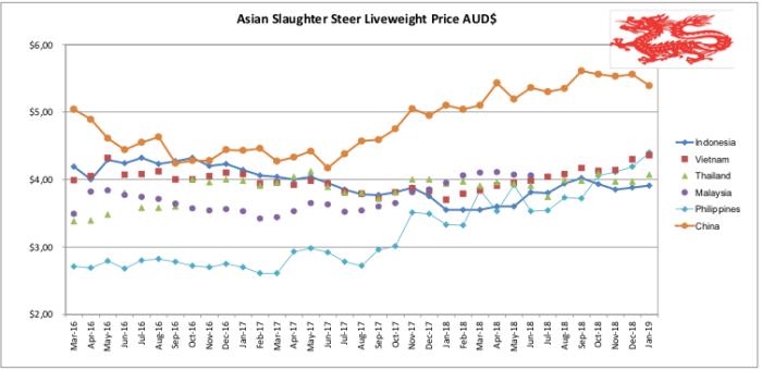 Asian Slaughter Steer
