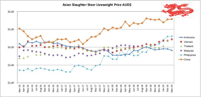 Asian Slaughter Steer Liveweight